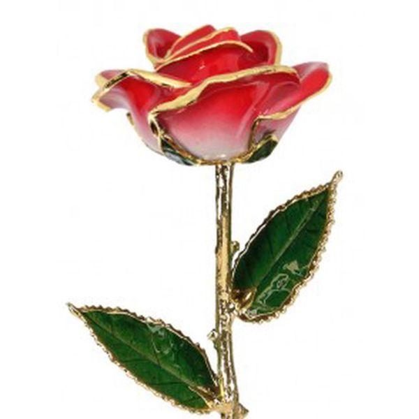 Two Tone Red 24k Gold Dipped Rose Robert Irwin Jewelers Memphis, TN
